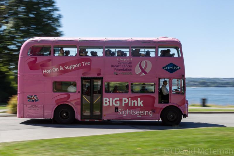 Pink Tourist Bus