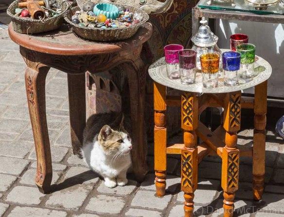 Morocco_Apr13_JML7826