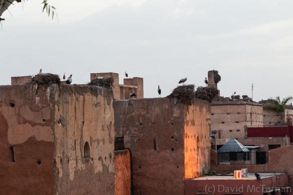 Storks at Kosybar