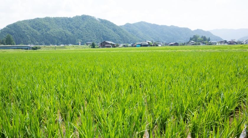 Blog_JapanJune2015__DSC0720
