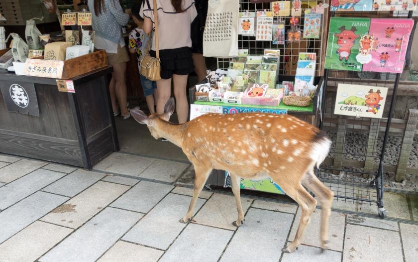 Blog_JapanJune2015__DSC0964