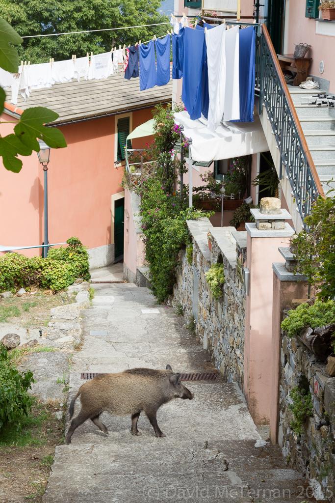 ItalySept2015__JML0844